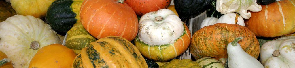 -_Pumpkin2_-